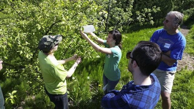 City Fruit Visits Meadowbrook