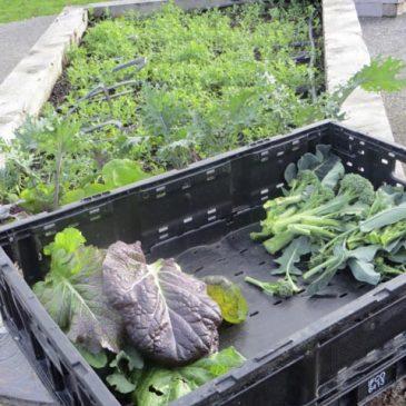 Meadowbrook Annual Garden Winter Harvest