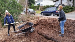 Edible Hedge along NE 105th gets some winter attention for upcoming improvements