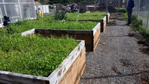 raised boxes promote easy access for all