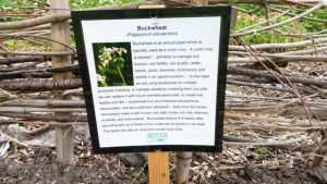 Signage in Orchard describing and defining the benefits of buckwheat
